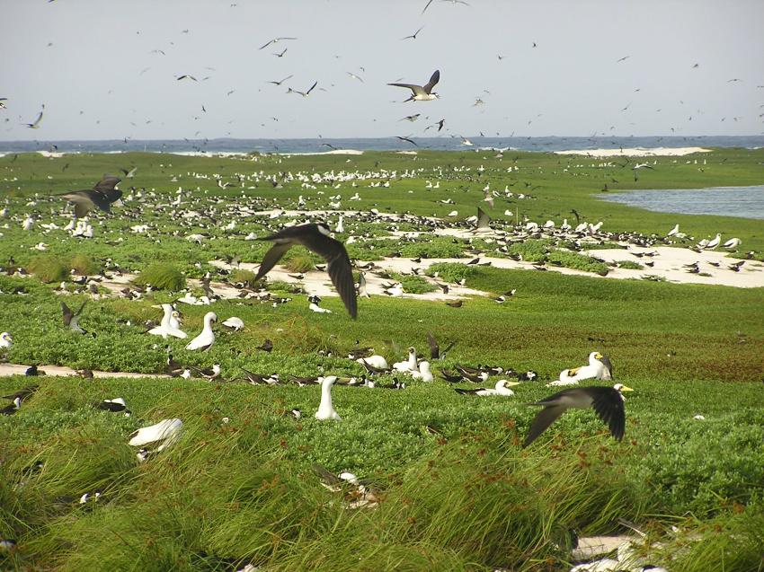 8941e5f4bb16b Atol das Rocas  reserva biológica - Arquivo ICMBio foto  Ana Paula Prates